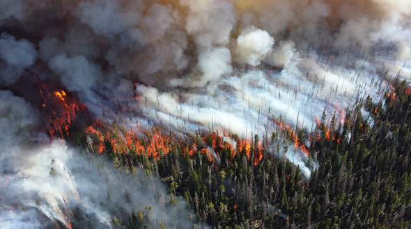 Uncontrolled wildfire burning through forest