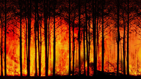 Wildfire burning uncontrolled in forest
